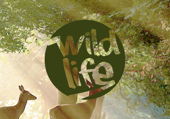 Wild Life Photography logo and website design